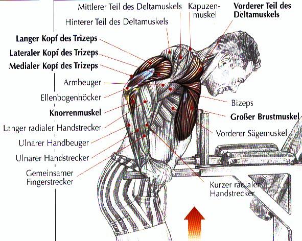 STÄRKER, EXPLOSIVER, MUSKULÖSER - Intelligent Coach
